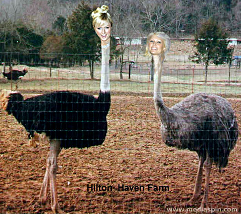 Paris Hilton On The Ostrich Farm