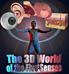 The 3D World of the Five Senses